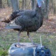 Turkey-robot1-244x270
